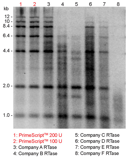 cDNA synthesis with low background, excellent extension, and high yield at 42°C by PrimeScript Reverse Transcriptase in comparison to six other commercially available RTases