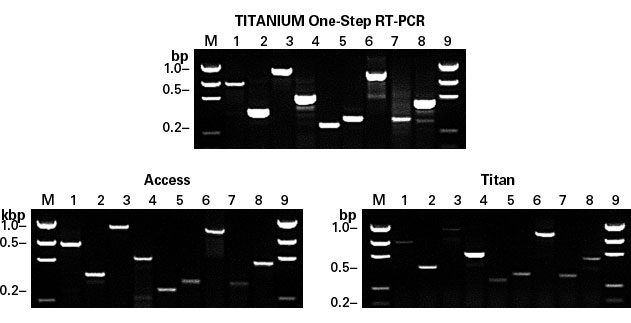Titanium One-Step RT-PCR is more efficient than other commercially available one-step kits